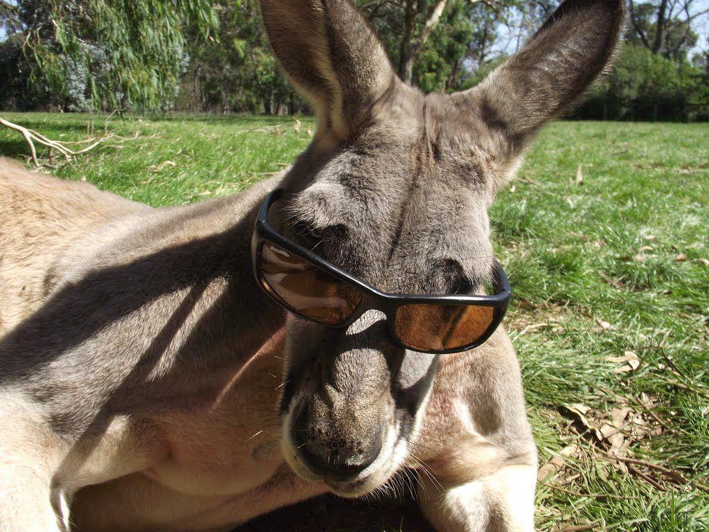Die Känguru Chroniken - der Film